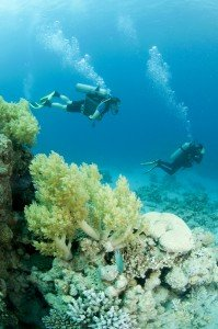 Caribbean Scuba Diving Pair