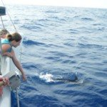 Mimbaw's guests experience a dolphin sighting in their Caribbean sailing vacation.
