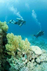 Caribbean Scuba Diving Pair