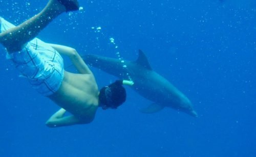 mcgregor iii swimming with dolphins